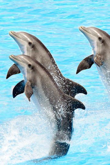表演中的海豚图片