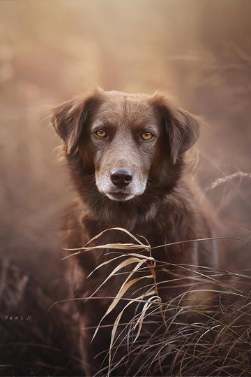 枯草丛里的狗狗图片