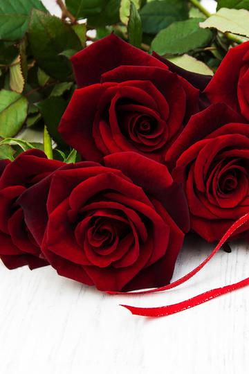 娇艳红玫瑰花束高清壁纸