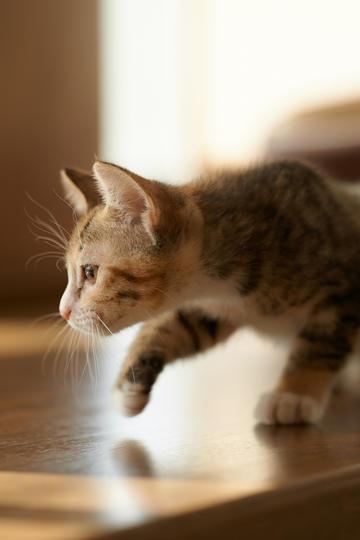 可爱狸花猫图片