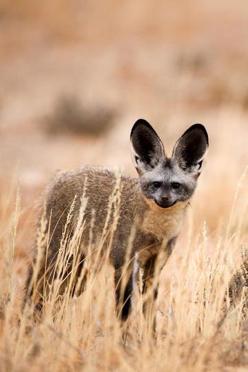 唯美野生动物图片