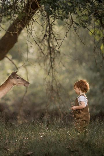 小男孩与梅花鹿儿童摄影图片