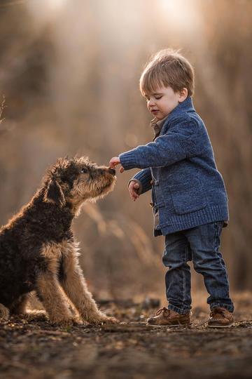 抚摸小狗的小男孩