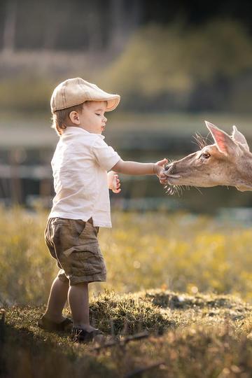 戴帽子的小男孩喂食梅花鹿儿童摄影图片