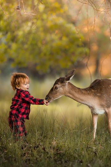 喂食梅花鹿的小男孩儿童摄影图片