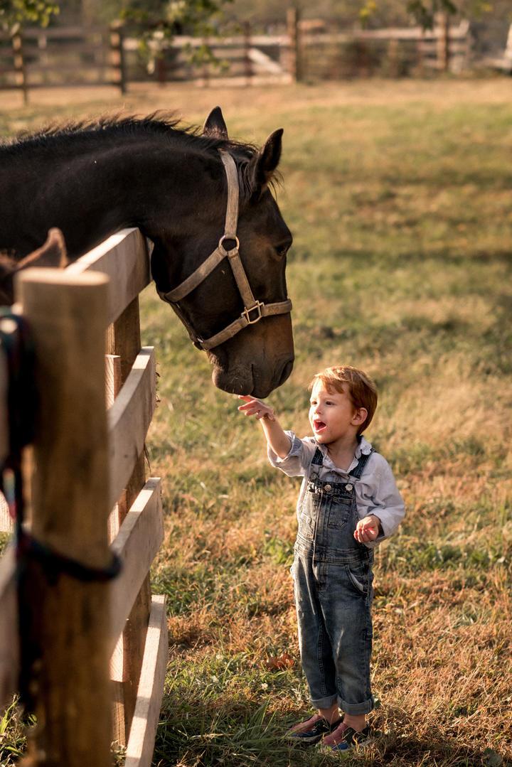 小男孩与马儿童摄影图片