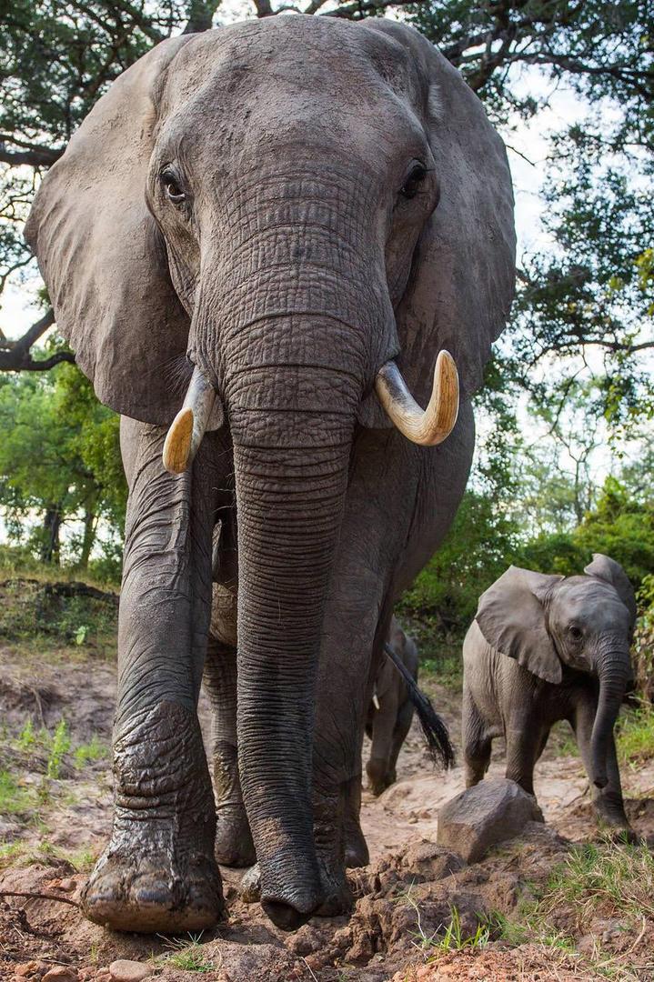 大象与小象动物摄影图片