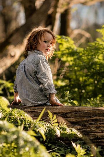 坐在树上的小男孩儿童摄影图片