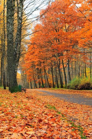 红色的枫叶自然风景图片