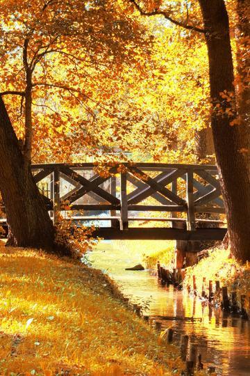 秋天小溪上的木桥自然风景图片