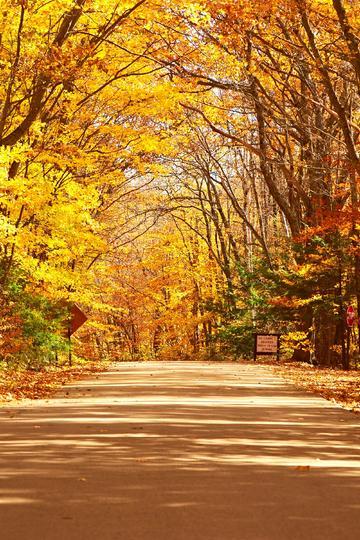 唯美秋天的树林自然风景图片