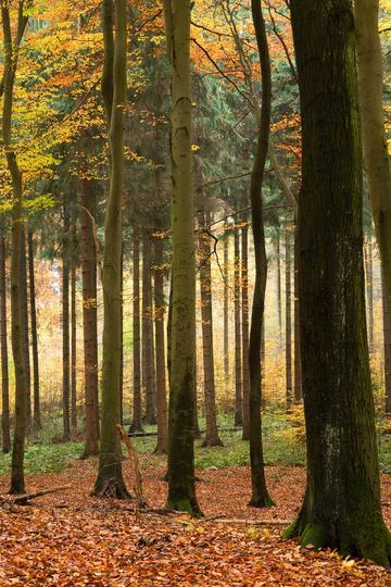 秋天的树林自然风景图片