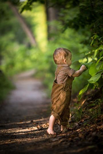 摘树叶的小男孩儿童摄影