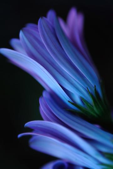 高清唯美紫色花朵特写鲜花图片