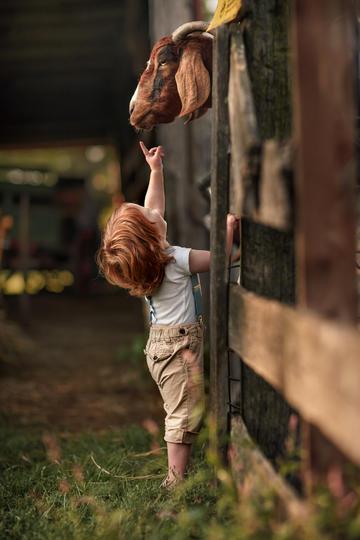 指着山羊的小男孩儿童摄影图片
