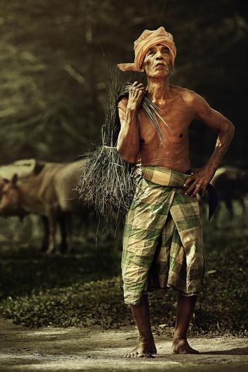 背着稻草的老人纪实摄影图片