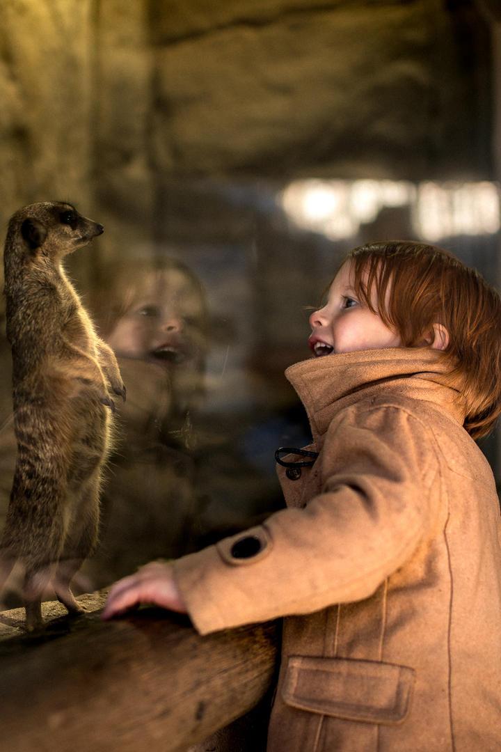 小男孩与鼬鼠儿童摄影图片