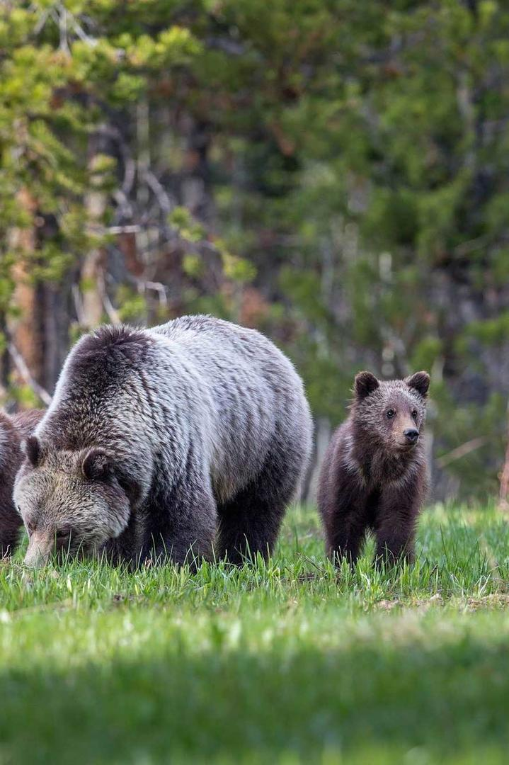 可爱的黑熊母子动物图片