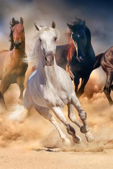 一群奔跑的骏马图片