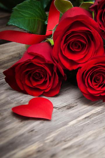 高清红玫瑰花图片
