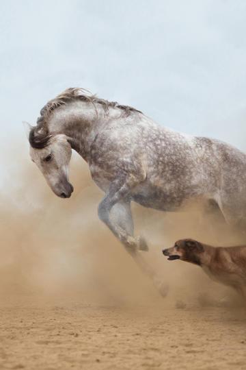 狂奔的白色骏马图片