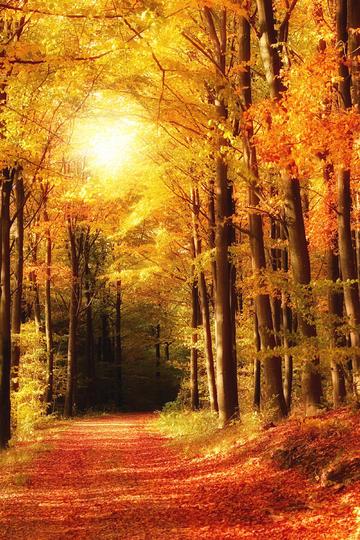 唯美秋天图片
