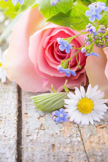 娇艳美丽的玫瑰花图片