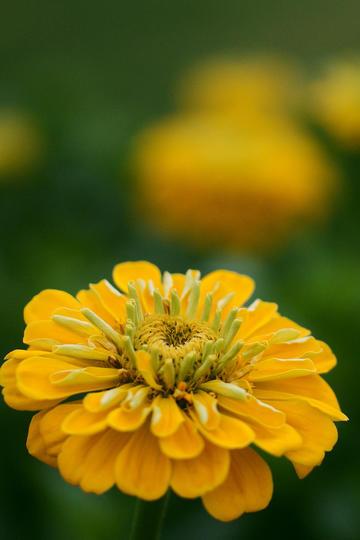 一朵流光溢彩的唯美鲜花图片