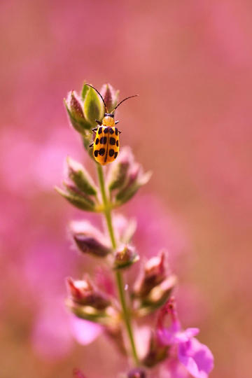 昆虫喜爱的唯美鲜花图片