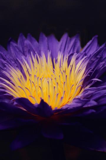 金铸玉雕唯美鲜花图片