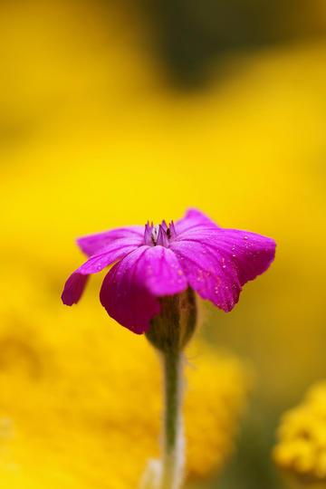 娇小艳丽的唯美鲜花图片