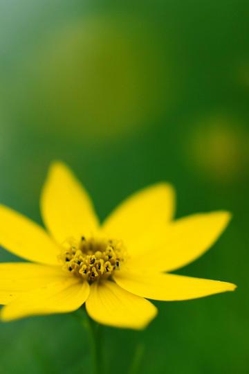 端庄秀丽的唯美鲜花图片