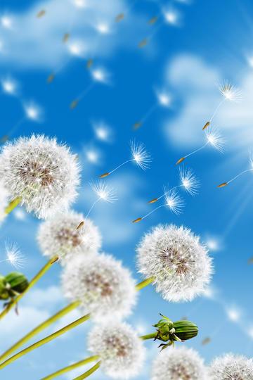 天空中漂亮的蒲公英鲜花图片