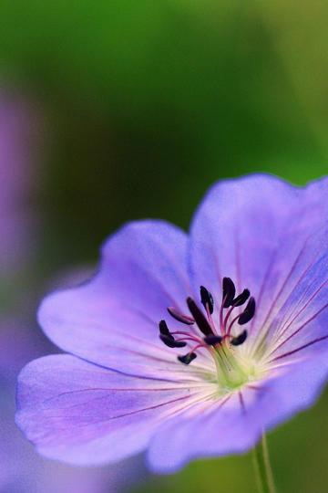 灿烂的紫色唯美鲜花图片
