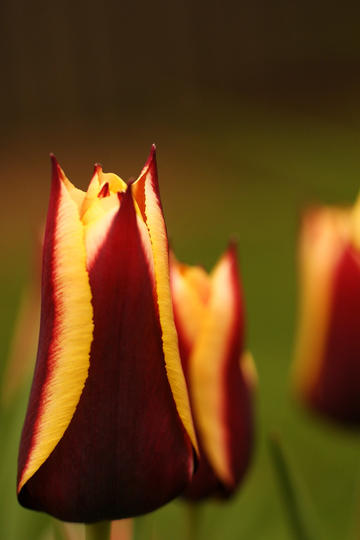 傲人的唯美鲜花图片