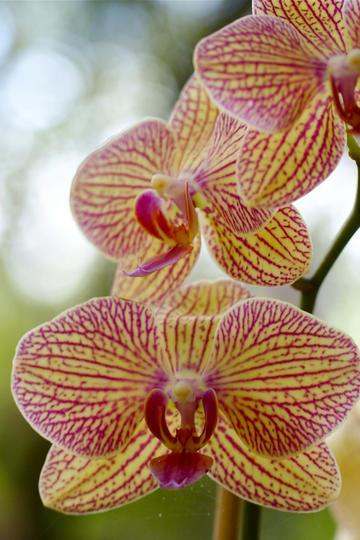 紫色纹理唯美鲜花图片