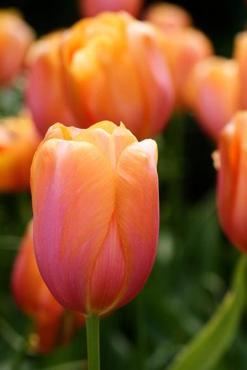 娇巧迷人的唯美鲜花图片