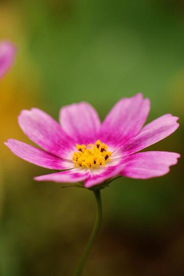 娇娆的紫色唯美鲜花图片
