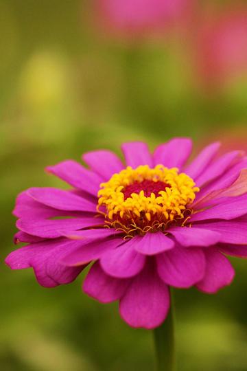 一朵唯美紫色鲜花图片