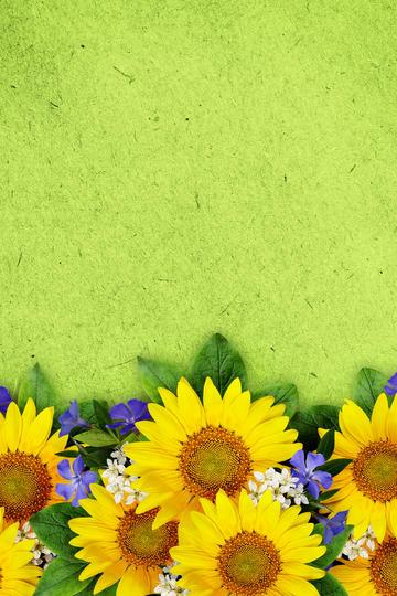 向日葵背景素材图片