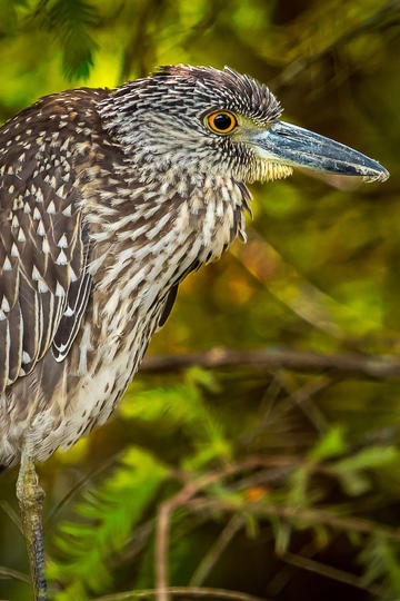 鸟类图片大全免费下载
