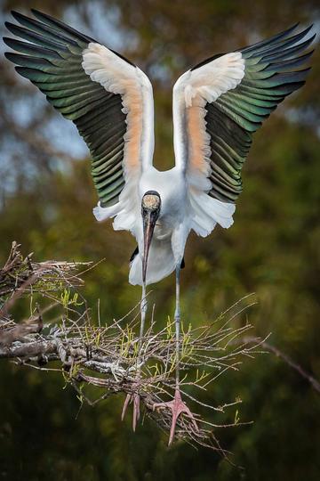 高清摄影鸟图片