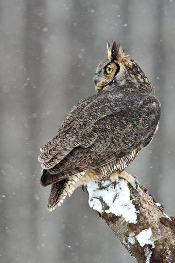 最新最全的鸟图片