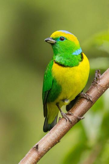 鸟类图片手机壁纸