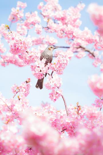 各种鸟类图片素材下载