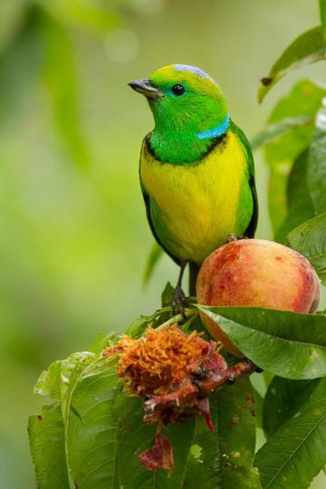 可爱小鸟的图片