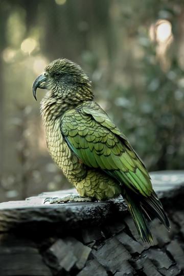 鸟类图片唯美背景素材
