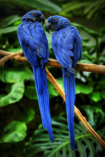 常见的鸟图片免费下载