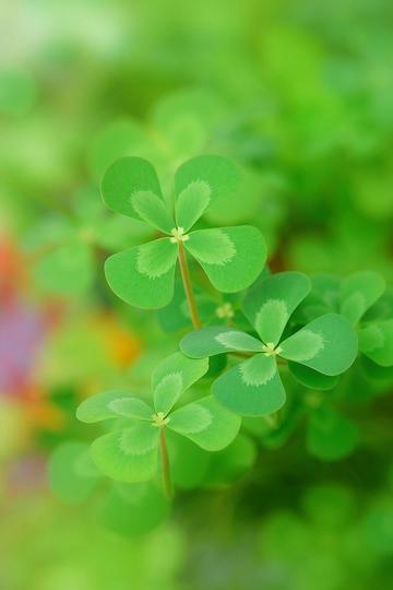 唯美青绿色的鲜花草图片